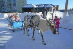 Северные олени в детском саду